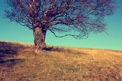 Leafless tree on meadow. Autumn leafless tree on meadow with clear blue sky and dry grass stock photos