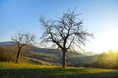 Leafless tree in the meadow with mountain and morning glow. stock image