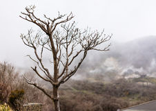 Leafless tree on a misty day. Expressing loneliness mood in winter season. stock images