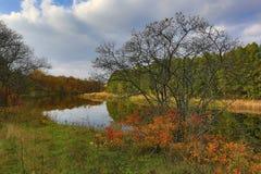 Leafless tree near river Stock Photo