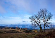 Leafless tree with panoramic view at dawn. Late november dawn view at the Pla de la Calma mountain plateau in norhteastern Catalonia, the trees have already lost stock images