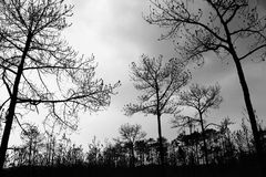 Leafless tree Stock Images
