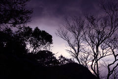 Leafless tree with purple sky in the evening. Leafless tree with purple sky in the evening in Thailand royalty free stock image