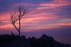 Leafless tree with purple sky. Leafless tree with purple sky on the mountain stock image
