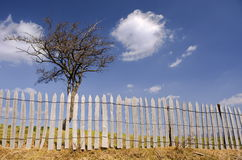 Leafless tree and rustic fence Stock Image