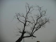 Leafless tree at Sewri dock. Mumbai, ibdia, india, asia, travel, nature, natural, trees, scary, beautiful stock images