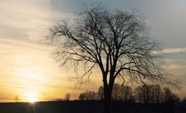 Leafless tree silhouette against rising sun stock photos