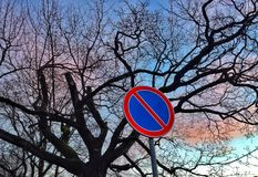 Leafless tree silhouette and colorful sky. Road sign, leafless tree silhouette and colorful sky stock photos