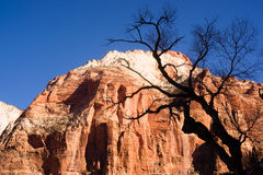 Leafless Tree Silhouette Contrast Against Red Rock Desert Mesa Royalty Free Stock Images