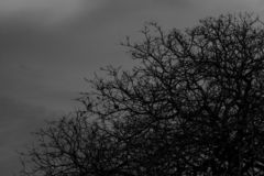 Leafless tree. Silhouette dead tree on dark dramatic sky and clouds background for scary or death. Halloween day background. stock image