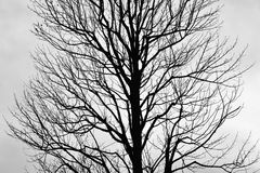 Leafless Tree silhouette in horizontal frame. Leafless Tree silhouette in monochrome stock photography
