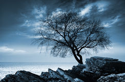 Leafless tree silhouette on rocky sea coast Royalty Free Stock Photography
