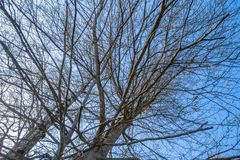 A leafless tree in the sky. An image of a leafless tree in the sky royalty free stock photos