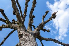 A leafless tree in the sky. An image of a leafless tree in the sky royalty free stock photo