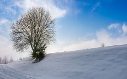 Leafless tree on snowy slope. Lovely winter nature background Royalty Free Stock Image