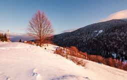 Leafless tree on snowy slope in morning light. Beautiful mountainous countryside in winter royalty free stock photos