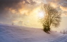 Leafless tree on snowy slope at sunset. Lovely winter nature background Royalty Free Stock Image