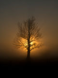 Leafless tree in sunset Royalty Free Stock Image