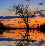 Leafless tree on sunset background Stock Photos