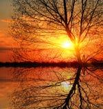 Leafless tree on sunset background Royalty Free Stock Photography
