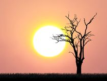Leafless tree sunset. Leafless trees with big sunset, pink sky and grass in summer stock photography