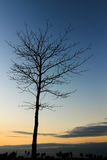 Leafless tree on sunset sky Stock Images