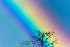 A leafless tree top against the beautiful rainbow sky. A leafless tree top with a number of branches seen against the beautiful colours of a rainow in the sky royalty free stock images