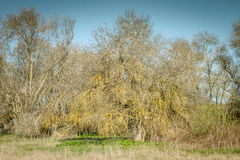 Leafless tree. Under tree with branches without leaves in autumn Stock Image