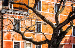 Leafless Tree in Venice, Italy Royalty Free Stock Photos