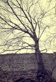 Leafless tree and a wall. Stock Photos