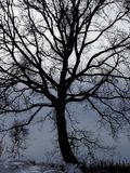 Leafless tree in winter. royalty free stock photos