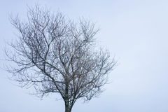 Leafless tree in winter season. Leafless tree in the winter royalty free stock photos