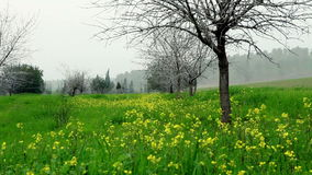 Leafless tree among yellow flowers. Video of leafless tree among yellow flowers stock video footage