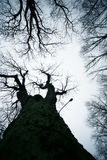 Leafless trees Stock Photography
