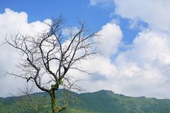 Leafless trees against the cloudy blue sky and mountain.  stock photo