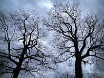 Leafless trees against evening sky Stock Photography