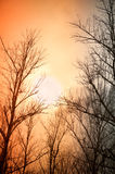 Leafless trees against the winter dusk background Royalty Free Stock Photo