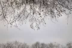Almost leafless trees in the autumn graphical and background use Royalty Free Stock Photography