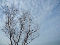 Leafless trees The background is blue sky, indicating the beginning of the winter. Coldness, solitude, despair, wilting, ending Royalty Free Stock Photo