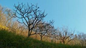 Leafless trees Royalty Free Stock Photo