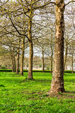 Leafless Trees at the Beginning of Spring Stock Image