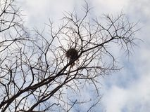 Leafless trees with branches. Close up stock photos
