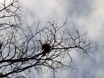 Leafless trees with branches. Nature stock photo