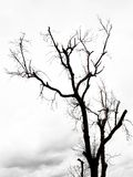 Leafless trees with  branches Stock Images