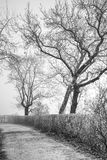 Leafless trees with crooked branches. In fog Stock Images