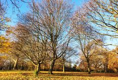 Leafless trees and foliage in autumn. Making it a colourful scenery stock photos
