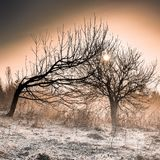 Leafless Trees During Golden Hour Stock Images