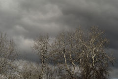 Leafless trees and grey clouds Royalty Free Stock Photo