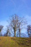 Leafless trees Stock Photos
