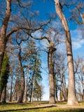 Leafless trees Stock Image